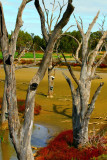 Kyrabram wetlands