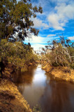 River banks Echuca