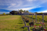 Restaurant and vines