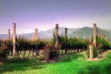 Vines in spring ~
