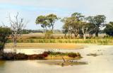 Kyabram Wetlands
