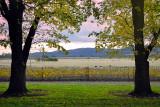 Autumn vineyard twilight ~