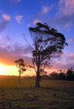 Gippsland farm sunset