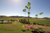 Debortelli Vineyard Valley