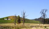Yarra Valley farmland