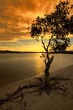 beach tree in the sunset