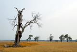 Fields of drought ~*