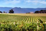 Vines and hay bales