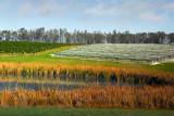 Vineyard and dam