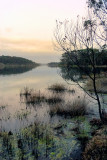 Lake Tyers at dusk ~