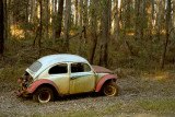 Beetle in the forest