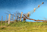 Fence under flood waters