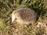 Miscellaneous Photos of Animals