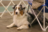 Crown Classic Dog Show 2006