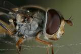reptielen, insecten en amfibieën