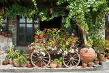 Bulgaria Veliko Tarnovo 5940