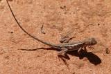 Australian Reptiles