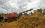 Threshing Time