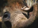 Elephant Pastel