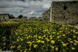 IMG_5161 -  Yarkon and Tel Afek National Park