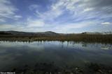 IMG_8446 - Hula Nature Reserve