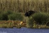 BM4J4991 - Hula Nature Reserve