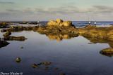IMG_6589 - Achziv National Park