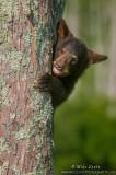 Bear cub peekaboo
