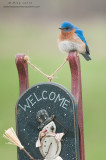 Bluebird on snowman welcome sign