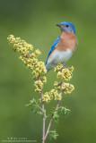 Bluebird stoic view