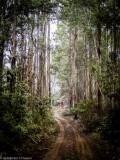 East Gippsland forest