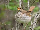 Oisillons -   Baby birds