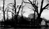 Gesnoeide lindebomen aan de Keizerinlaan