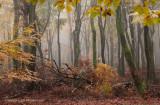 Beukenreservaat, herfst - Beech reserve, autumn 3 (van/of 4)