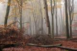 Beukenreservaat, herfst - Beech reserve, autumn 2 (van/of 4)