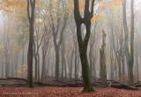 Beukenreservaat, herfst - Beech reserve, autumn 1 (van/of 4)