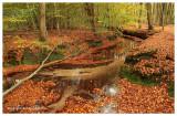 Herfstbeek - Autumn brook