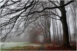 Bospaadje - Forest path
