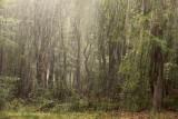 Rainfall in the forest - Regen in het bos