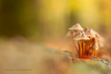 Mushrooms - Paddenstoelen