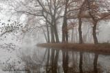 Brook, fog - Beek, mist