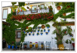 P1010448-patio andaluz
