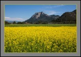 Spring Wildflowers - San Luis Obispo, CA