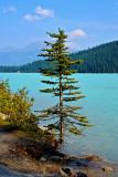 59_Lake Louise.jpg