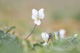Paddestoelen,  Orchideeën e.a. Planten