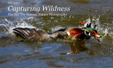 Capturing Wildness