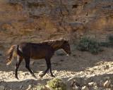 Piceance Horse Photos