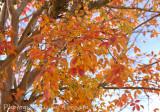 Fall leaves blue sky