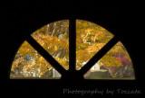 Fall trees thru door window