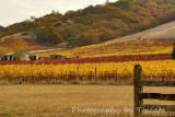 Fall vines hill